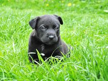 Dog, Puppy, Animal Portrait Stock Photos