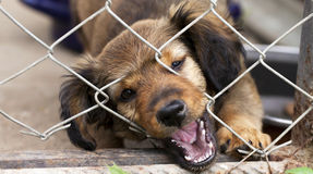 Dog puppy banner. Dog rescue banner - cute puppy looking behind the fence Stock Photos