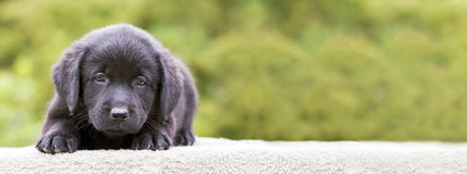 Dog puppy banner. Website banner of a cute dog puppy Royalty Free Stock Images