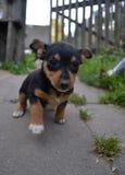 Dog puppy. Beautiful dog running along the path royalty free stock photo