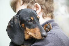 Dog puppy breed dachshund on the shoulder of a boy, a teenager a. Nd his pet Royalty Free Stock Images