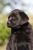 Dog puppy Royalty Free Stock Photo