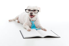 Dog Puppy Education Training Stock Photography