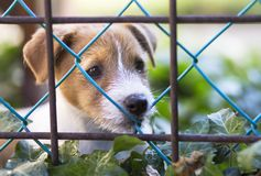Dog puppy looking behind a fence Stock Photos