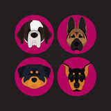 Dog and Puppy Set Doberman Vector and Icon Stock Photos
