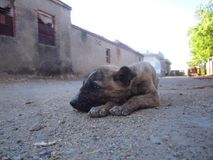 Dog Puppy sleep between Street Stock Photos