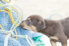Dog-puppy snooping at a fishing net Royalty Free Stock Photos