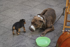 Dog and puppy at street Stock Photo