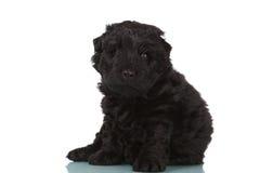 Dog puppy on white background Stock Photography