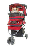 Dog in pushchair. In front of white background Royalty Free Stock Photos