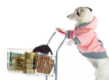 Dog pushing a shopping cart full of food Royalty Free Stock Photo