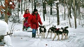 Dog in Quebec. Canada, north America. Dog in Quebec. Canada north America stock photos