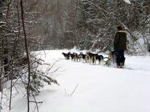 Dog in Quebec. Canada, north America. Dog in Quebec. Canada north America stock image