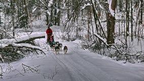 Dog in Quebec. Canada, north America. Dog in Quebec. Canada north America royalty free stock image