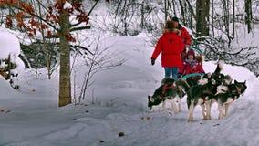 Dog in Quebec. Canada, north America. Dog in Quebec. Canada north America royalty free stock photos
