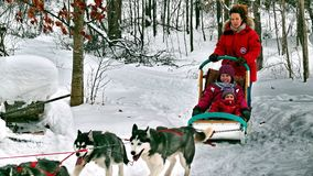 Dog in Quebec. Canada, north America. Dog in Quebec. Canada north America stock photo