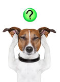 Dog question mark. Dog thinking with a question mark on top royalty free stock images