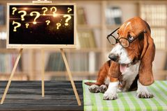 Dog. Question mark thoughtful advice animal answers Royalty Free Stock Photography