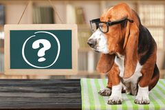Dog. Question mark thoughtful advice animal answers Royalty Free Stock Photo