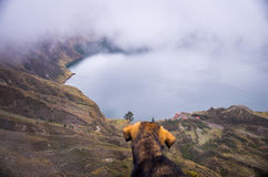Dog at Quilotoa crater lake, Ecuador. Dog looking at volcanic crater lake in Quilotoa, Ecuador. Quilotoa is a popular place to visit Royalty Free Stock Image