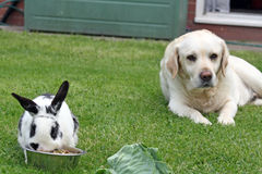 Dog and rabbit Royalty Free Stock Image
