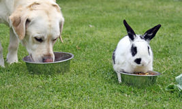 Dog and rabbit Royalty Free Stock Images