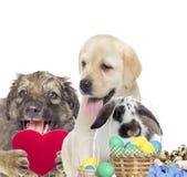 Dog, rabbit and Easter set Stock Photo