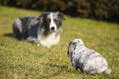 Dog and rabbit, head to head Royalty Free Stock Photos