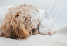 Dog and rabbit playing Stock Photography