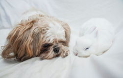 Dog and rabbit playing Royalty Free Stock Photos
