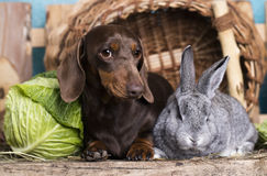 Dog and rabbit small Royalty Free Stock Photography