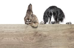 Dog and rabbit wood royalty free stock photos