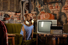 Dog radioman in retro style Royalty Free Stock Photography