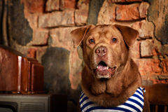 Dog radioman in retro style Royalty Free Stock Image
