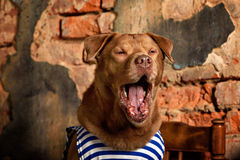 Dog radioman in retro style Royalty Free Stock Images