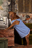 Dog radioman in retro style Stock Images