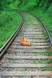 Dog rails Stock Photo