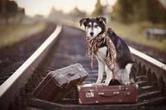 Dog on rails with suitcases. The dog looks for the house. The dog waits for the owner. The lost dog Royalty Free Stock Photos