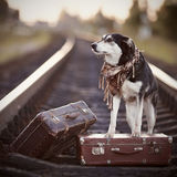 Dog on rails with suitcases. Royalty Free Stock Images