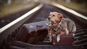 Dog on rails with suitcases. Royalty Free Stock Photo