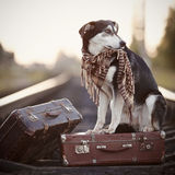 Dog on rails with suitcases. Royalty Free Stock Photos
