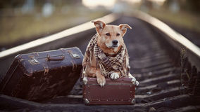 Dog on rails with suitcases. Royalty Free Stock Photography