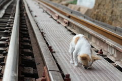 Dog on railway Stock Photos