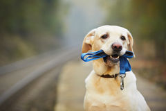 Dog on the railway platform Royalty Free Stock Photos