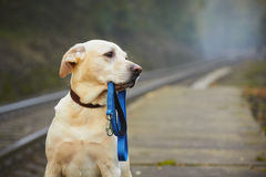Dog on the railway platform Royalty Free Stock Images