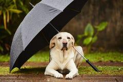 Dog in rain Stock Photography