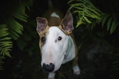 A dog in a mysterious forest royalty free stock images
