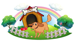 A dog and a rainbow Royalty Free Stock Photography