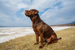 Dog raised her head. Mixed breed dog sitting on a grass againt frozen mountain lake raising her head. Wide angle perspective, the view from below Stock Images