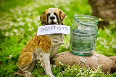 Dog raising money for the donations Royalty Free Stock Photo